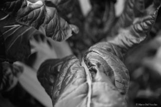 plantflowers-2-of-2_15070392570_o